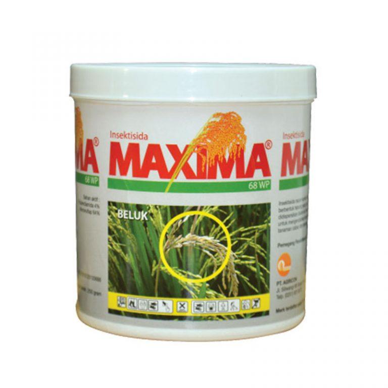 Maxima 68 WP